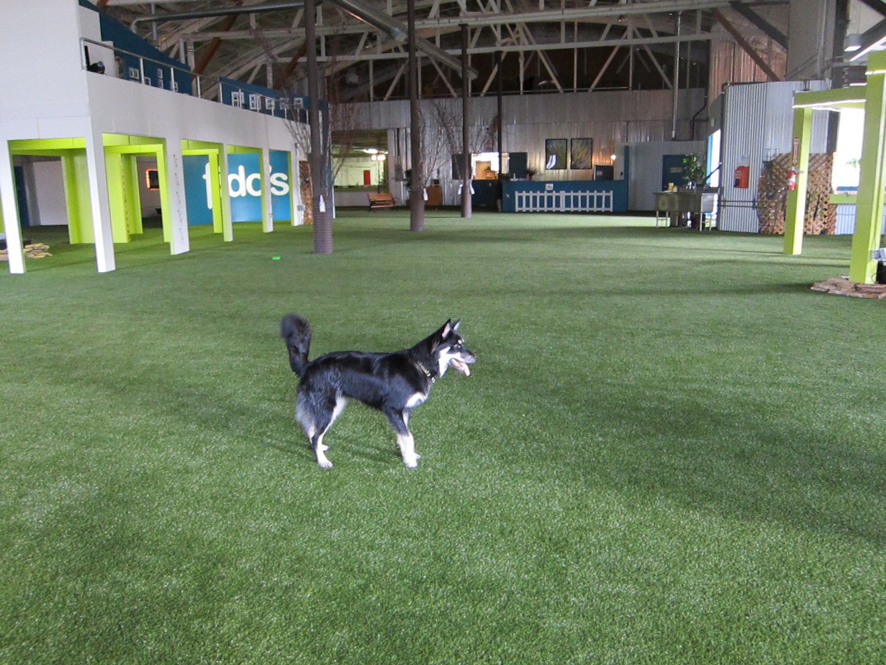 Portland Dog Indoor Park