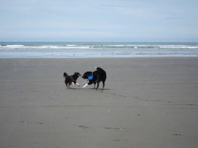 Sage & Toby