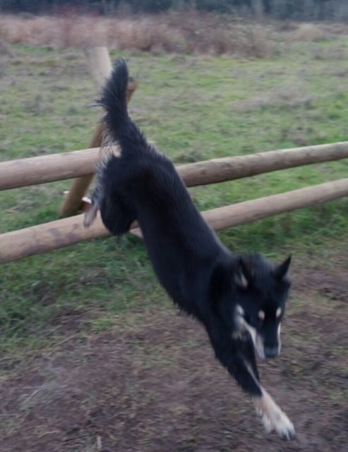 Practicing my agility