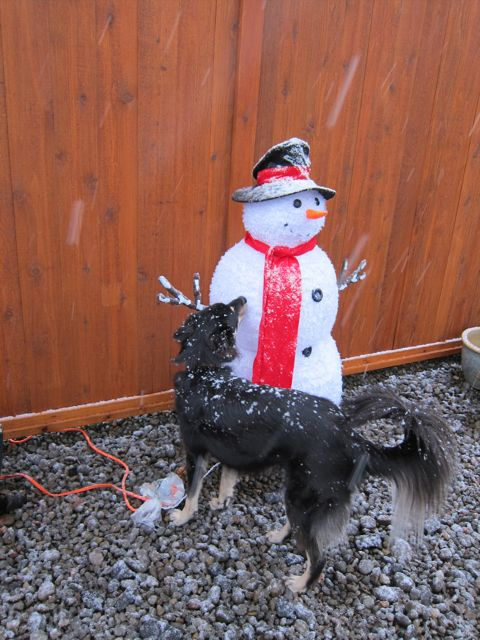 Snow on Mr. Snowman