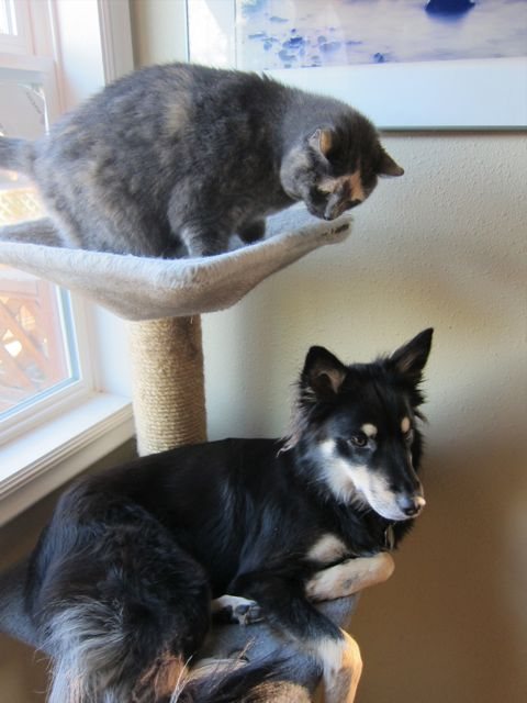 Mystic & Sage in cat tree
