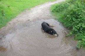 Ahhhh, a nice cool mud puddle