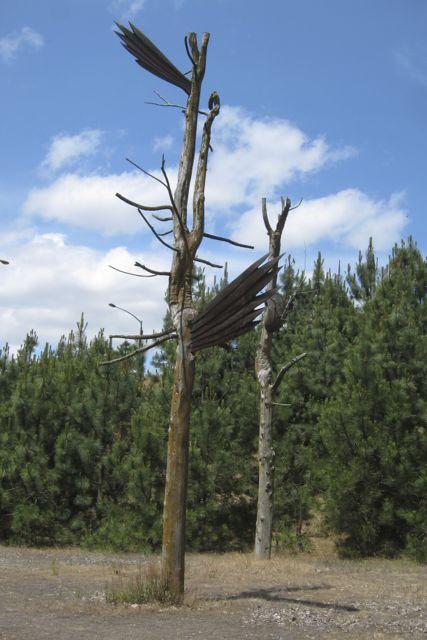 Tree snags