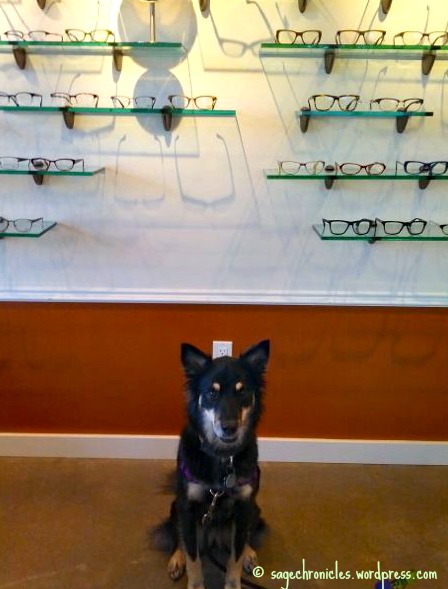 At the glasses store