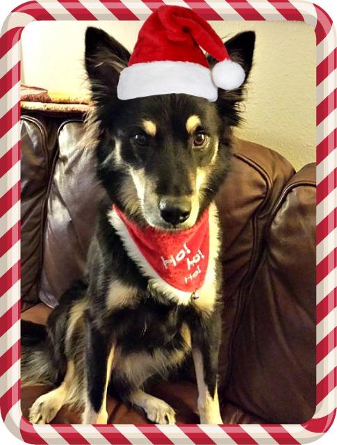 Christmasy Sage