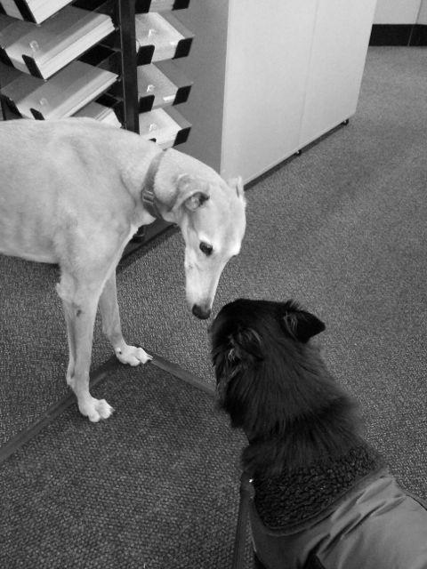 Sage & greyhound