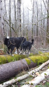 Toby & Sage on the log