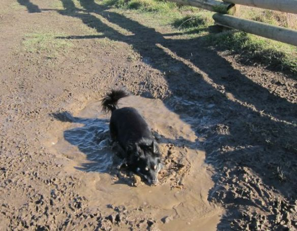 me--in the mud