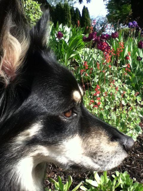 Sage & flowers