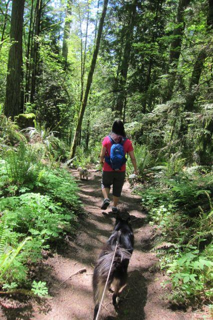 Down a trail