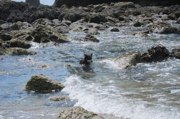 A dip in the ocean