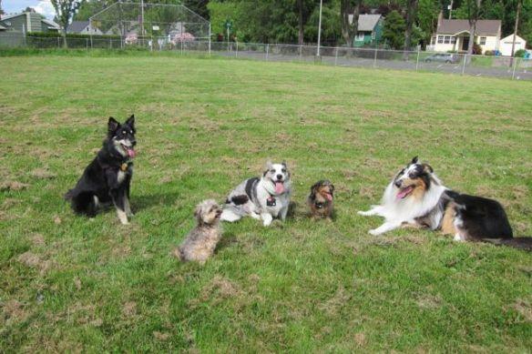 5 dogs in a school yard