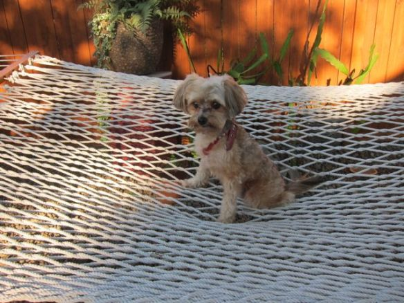 Mr. N on the hammock