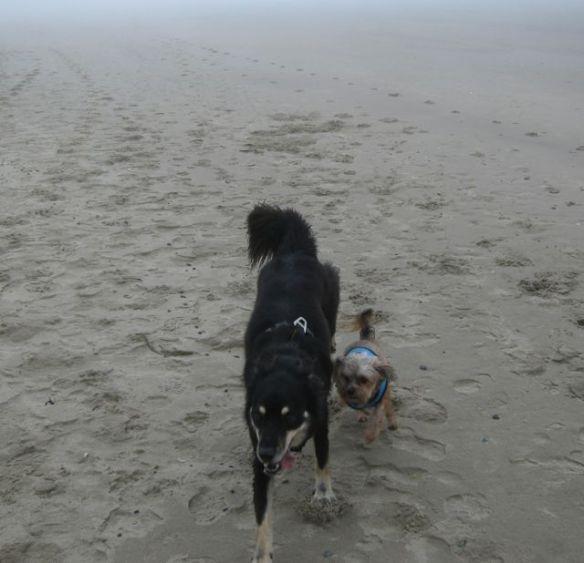 Sage & Mr. N running