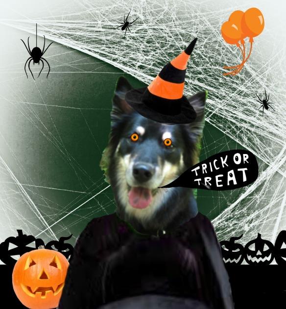 Halloween Sage