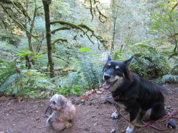 Sage & Mr. N on the trail