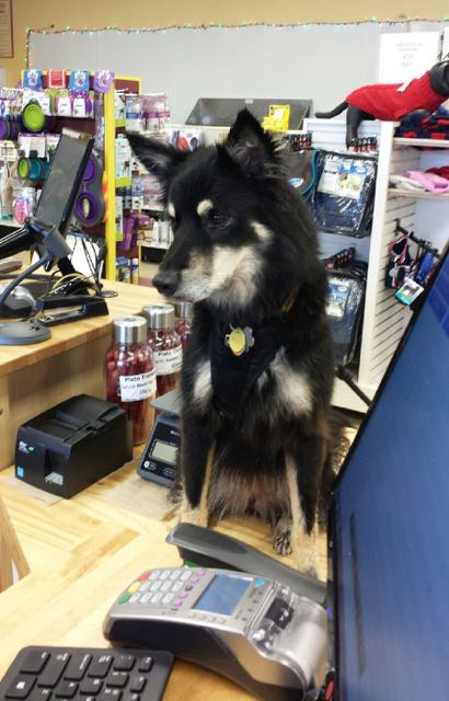 Sage at the pet store