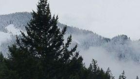 Fog & snow